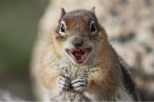 rabid-squirrel